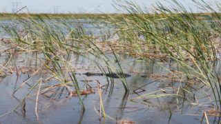 Ways to Experience the Florida Everglades