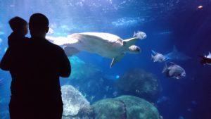 GIVEAWAY: Tickets to the Tennessee Aquarium